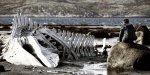 Zviaguintsev: Le cri de la baleine se perd dans la vodka