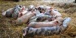 Agriculture: vivement la fin de l'embargo russe