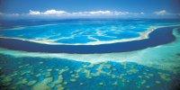Quand Greenpeace se prend les pieds dans le corail