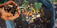 Foutre des piles dans le compost!