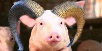 Eugénie hésite à balancer son porc