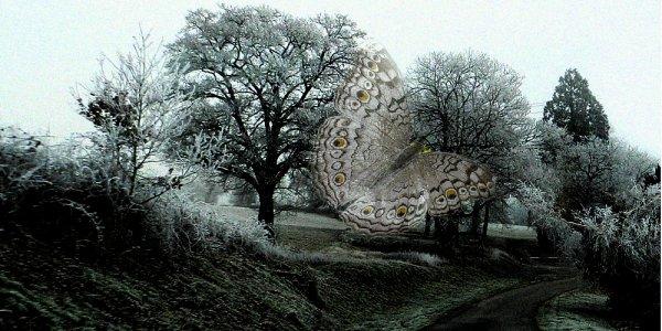 Papillons d'hiver